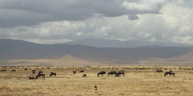 Tiere im ngorongoro krater
