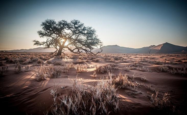 Wüste, Baum in Namibia