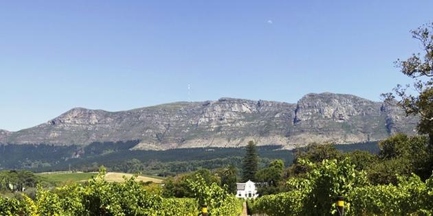 Weingut in Südafrika Stellenbosh