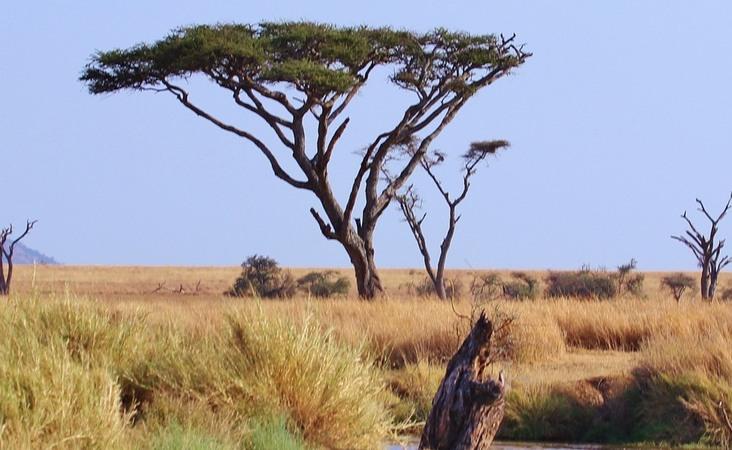 Landschaft der Serengeti