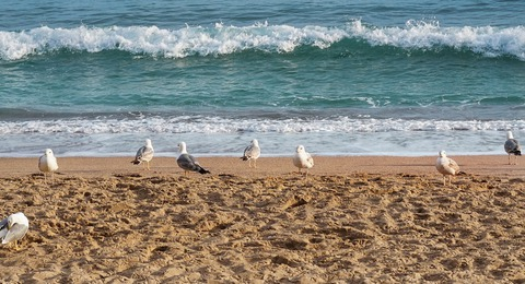 Möwen am Meer im Sand