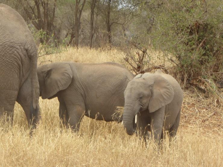 Elefantenherde Safari