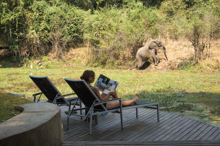Frau auf Terrasse lesend mit Babyelefant