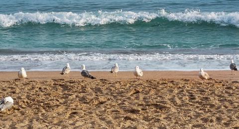 Möwen am Strand Südafrikas