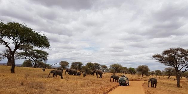 Elefanten im Nationalpark