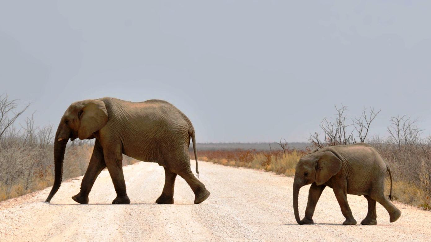 Elefanten im Etosha Nationalpark