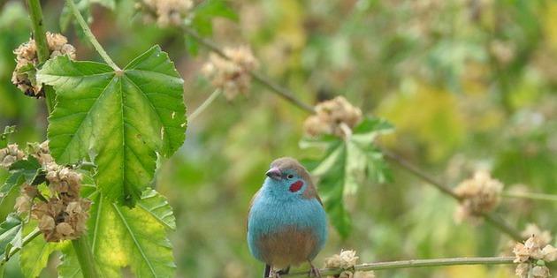 Vogel in Äthiopien