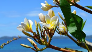 Blumenpracht in Madagaskar