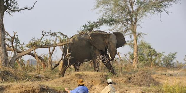 Kanutour auf dem Malawisee mit Elefant
