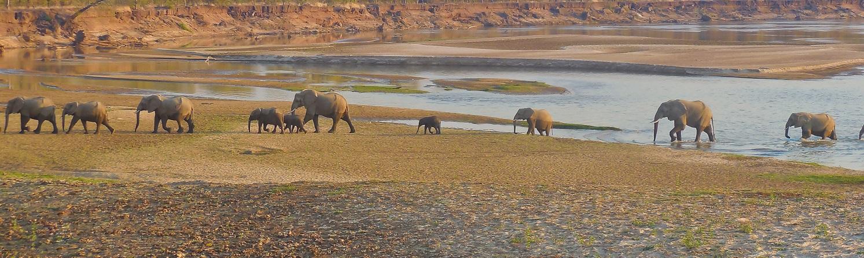 Elefanten am Sambesifluss