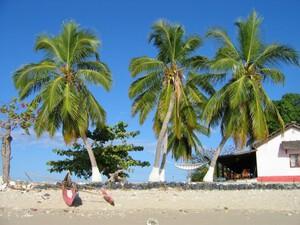 Palmen am Strand Madagaskars