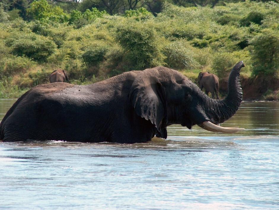 badende Elefanten im Fluss