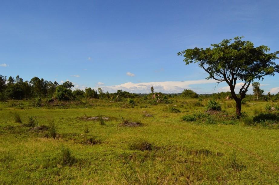 Landschaft in Uganda
