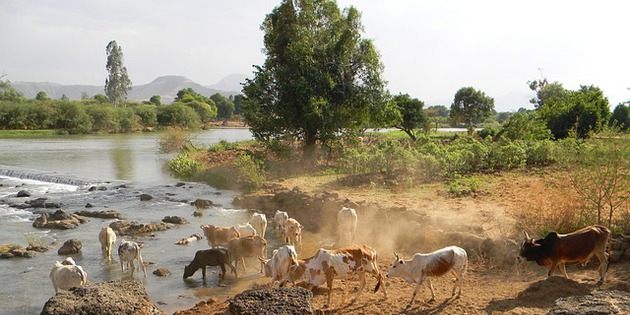 Nilufer in Äthiopien Afrika