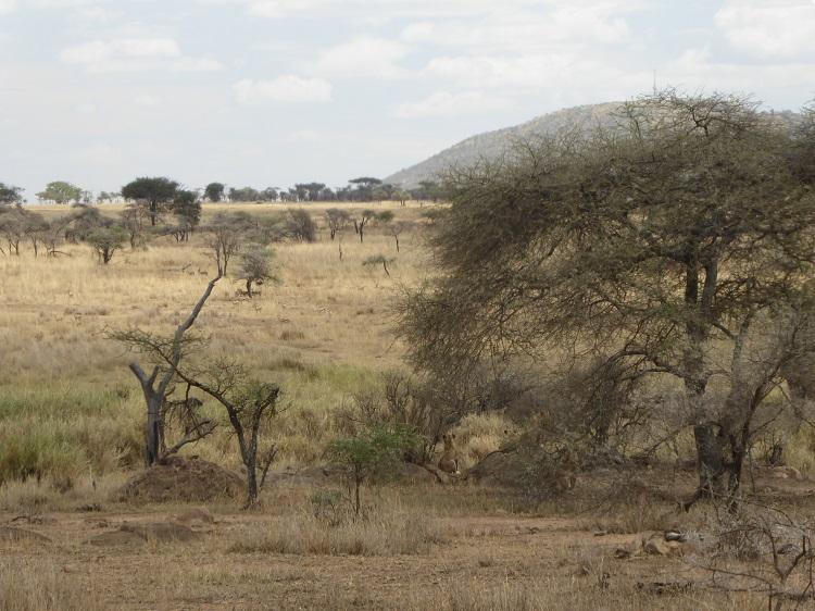 Landschaft Kenia
