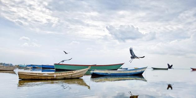 Boote und Möwen auf dem Albertsee in Uganda