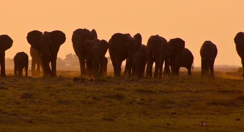 Addo Elephantpark Elefantenherde im Sonnenuntergang