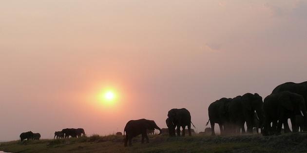 Elefantenherde am Wasser