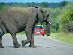 Elefant im Krüger Nationalpark