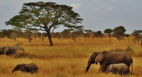 Tansania Elefanten Bäume