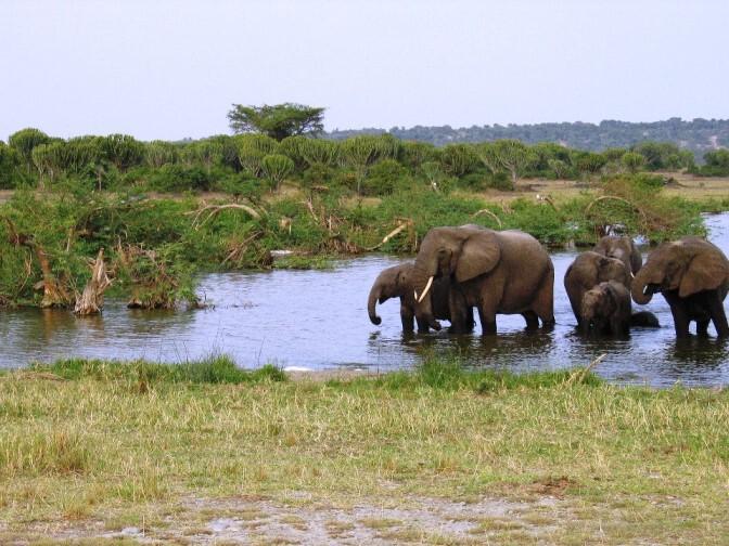 Elefantenherde bei einem Wasserloch