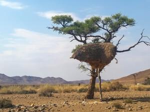 Vogelnest im Damaraland