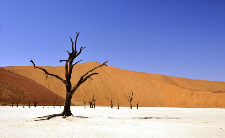 Namibia verdörrter Baum Wüste