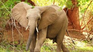 Elefant im Nationalpark