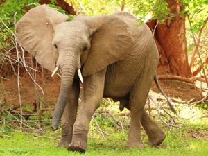 ​Elefant im Nationalpark