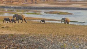 Elefanten Afrika Tiere Big five