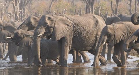 Elefanten badend im Fluss