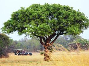 Safari durch den Krüger Nationalpark