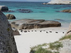 Strand von Kapstadt