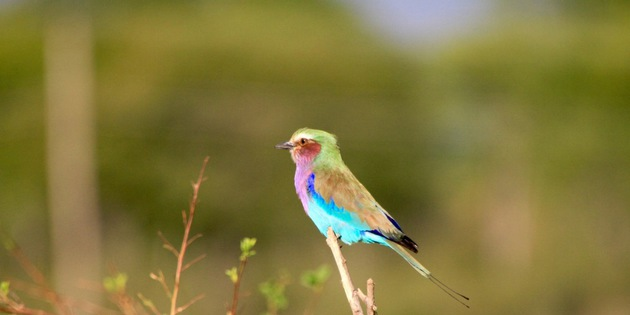 ​Bunter Vogel in Malawi