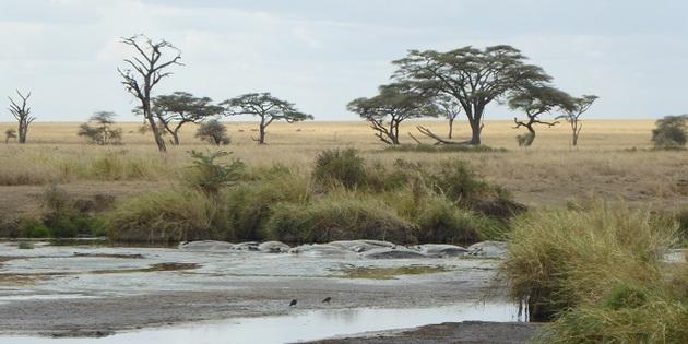 Springböcke Nilpferde