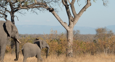 Elefant unterm Baum