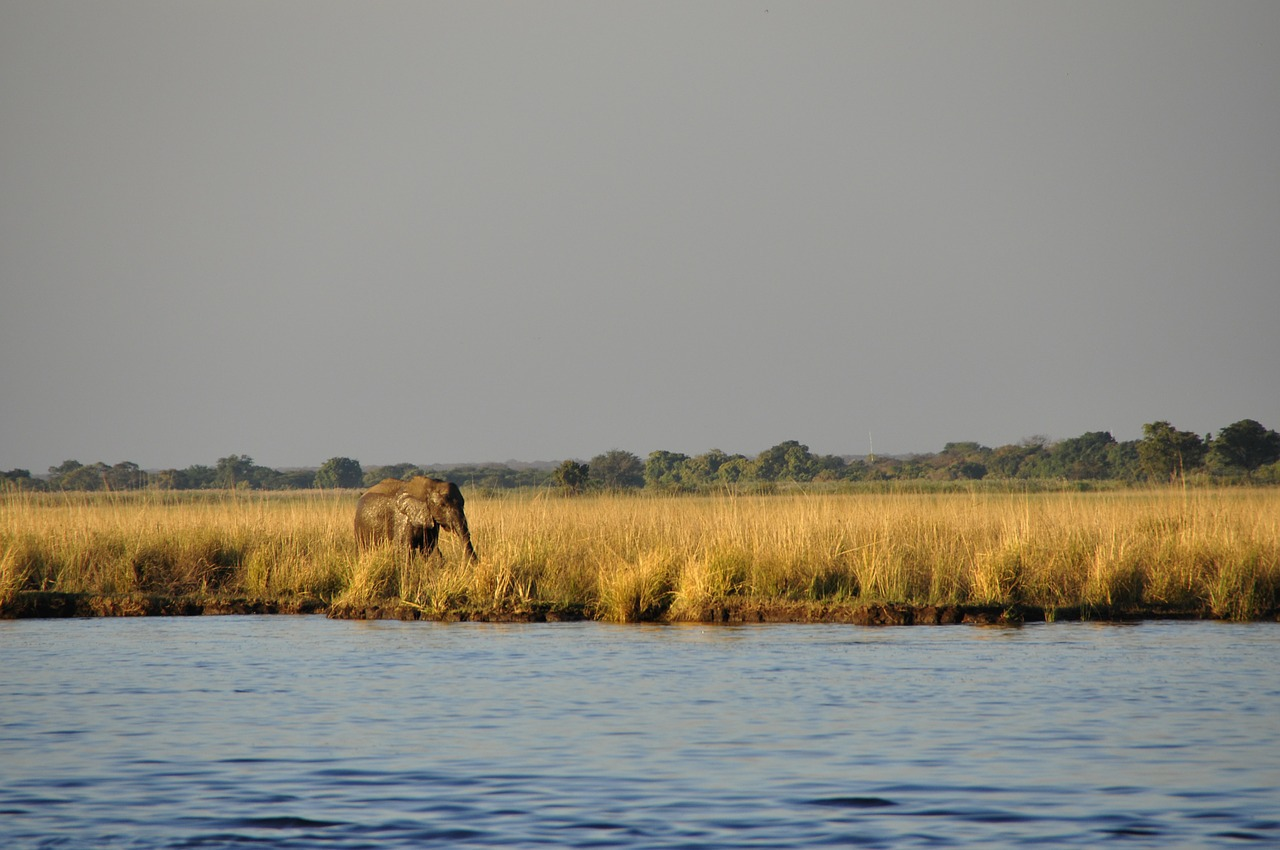 Elefant im Chobe Nationalpark