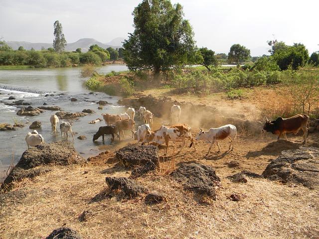 Nilufer in Äthiopien