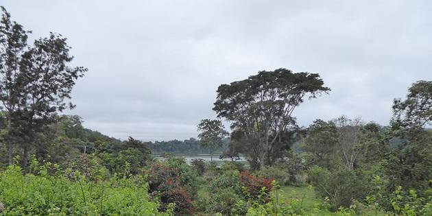 Bäume in Afrika