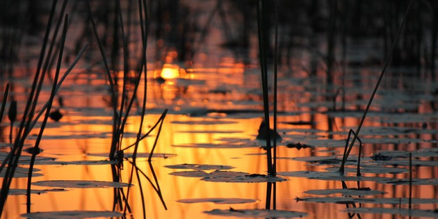 Abendstimmung am Fluss Chobe