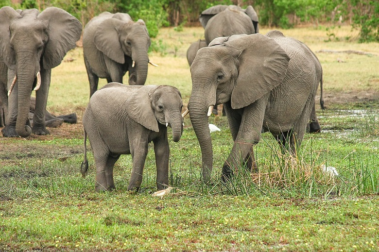 Elefantenherde in Südafrika