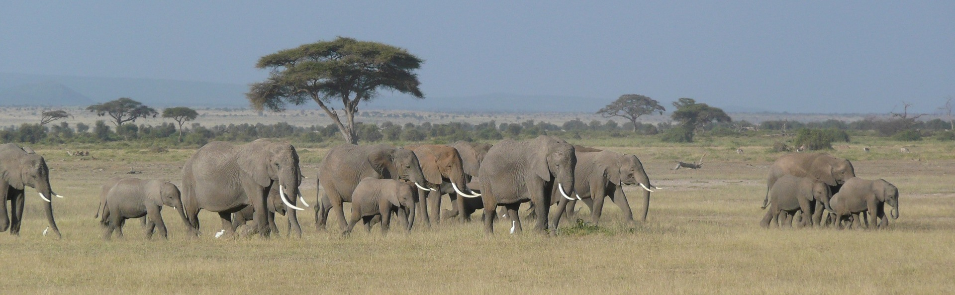 Elefantenherde in Kenia