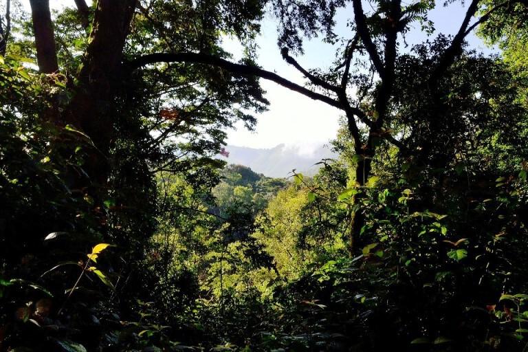 Bwindi Impenetrable Nationalpark