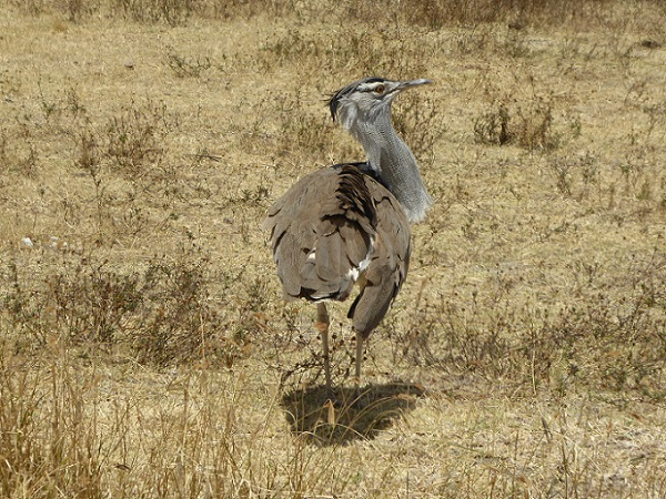 Safari Vögel